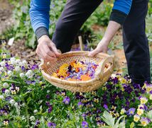 Flowers being picked and placed in a basket.