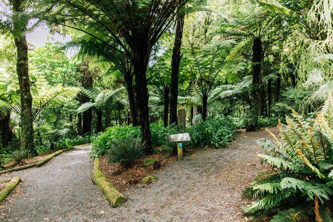 Two paths at Otari Wilton Bush.
