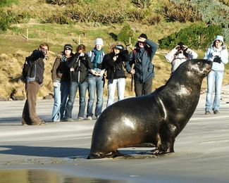 A large seal.