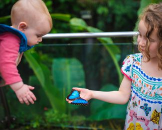 Two kids looking at a blue butterfly.